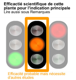 efficacite-plante-medicinale-prouvee-orange