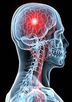 7 idées d'aliments pour un bon fonctionnement du cerveau et la prévention d'Alzheimer