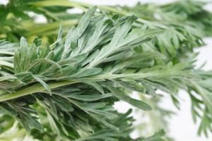 Artemisiae-absinthium-creapharma