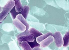 Historique sur les antibiotiques - Découverte de la pénicilline