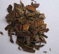 Cascara - Plante Médicinale