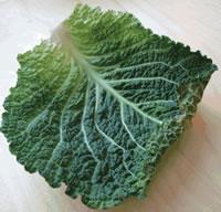 Chou - Plante médicinale