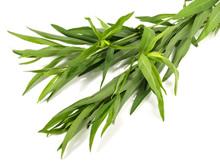 estragon - Plante médicinale