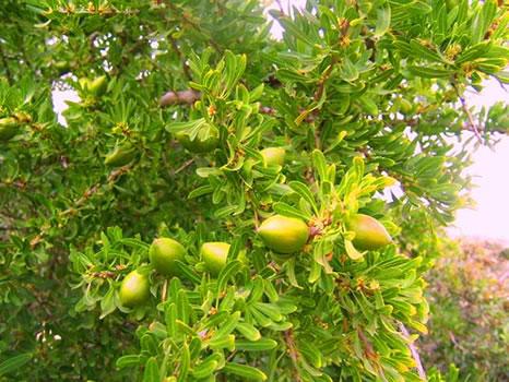argane - hydratant