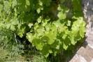 Jambes lourdes vigne rouge