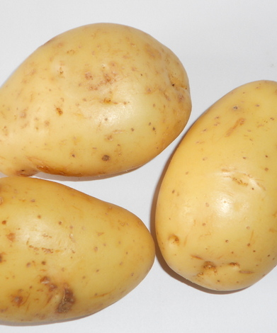 Pomme de terre - Solanum tuberosum