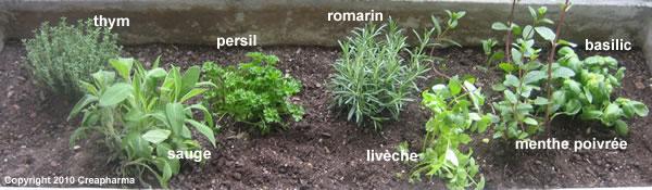 Persil - 7 plantes médicinales à planter au printemps.