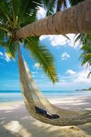 Huile de coco - Coco - Plante médicinale