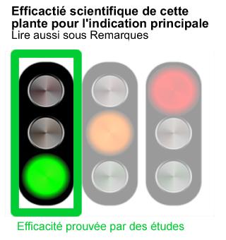efficacite-plante-medicinale-prouvee-vert
