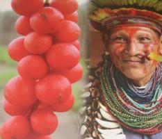 Guarana - contre la fatigue