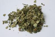 Tisane d'hamamélis - remèdes de grand-mère