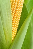 Le popcorn, un aliment minceur ?