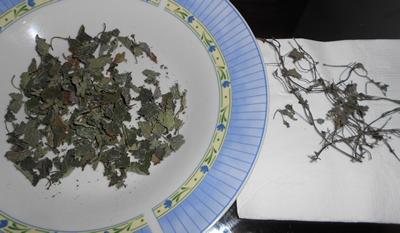 4-melisse-plantes-tisane