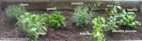 7 plantes m dicinales cultiver au printemps creapharma for Bd du jardin botanique 50 bruxelles