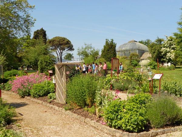 plantes mdicinales que lon peut observer dans ce jardin liste non exhaustive - Jardin Botanique Geneve