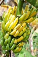 banane contre l'insomnie