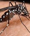 dengue définition