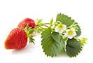 fraises - Smoothie aux baies