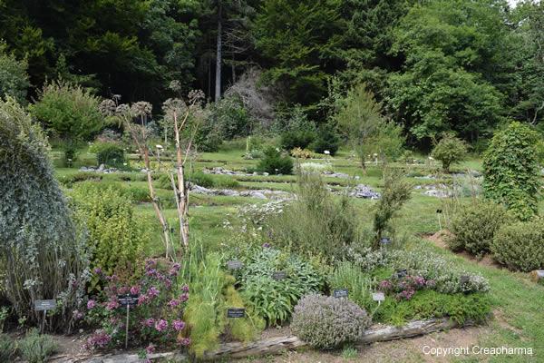 Jardin botanique de leysin gentiana creapharma for Jardin botanique hiver 2015