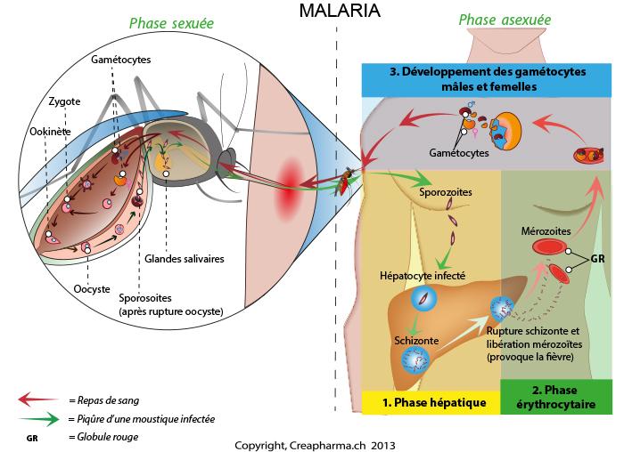 Malaria infographie