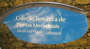 plantas-medicinais-rio