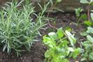 plantes-jardin-une2
