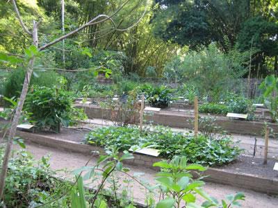 plantes-medicinales-rio-janeiro