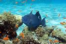 Remède en cas de brûlures de coraux