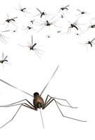 Dengue actualité au Brésil