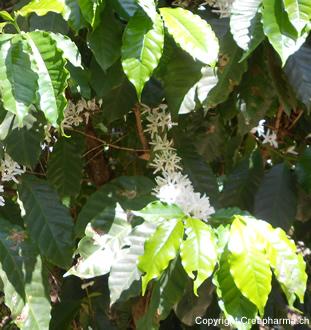 Tour du monde des plantes m dicinales creapharma for Plante 150 maladies madagascar
