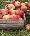 pommes fibres alimentaires