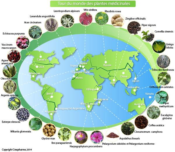 Tour du monde des plantes médicinales infographie