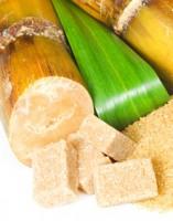 Nutrition canne à sucre